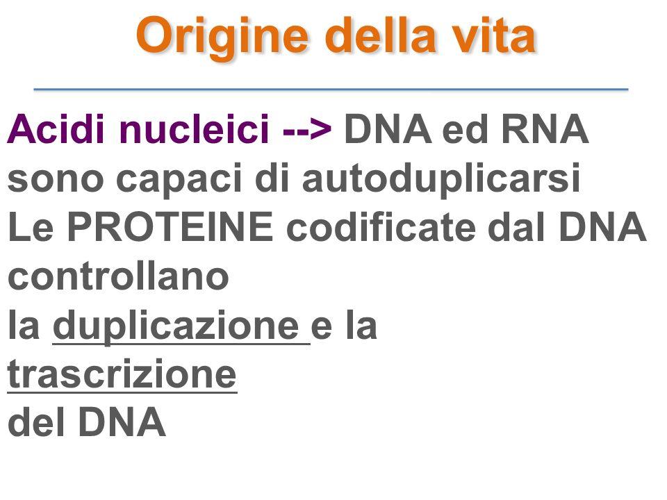 Acidi nucleici --> DNA ed RNA sono capaci di autoduplicarsi Le PROTEINE codificate dal DNA controllano la duplicazione e la trascrizione del DNA Origi