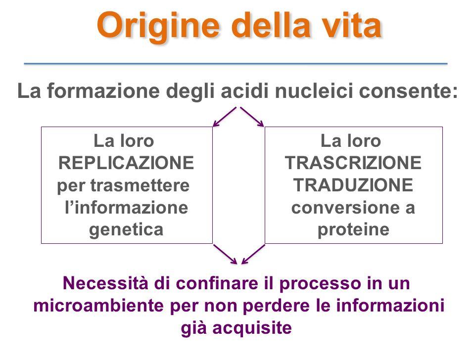 La formazione degli acidi nucleici consente: La loro REPLICAZIONE per trasmettere linformazione genetica La loro TRASCRIZIONE TRADUZIONE conversione a