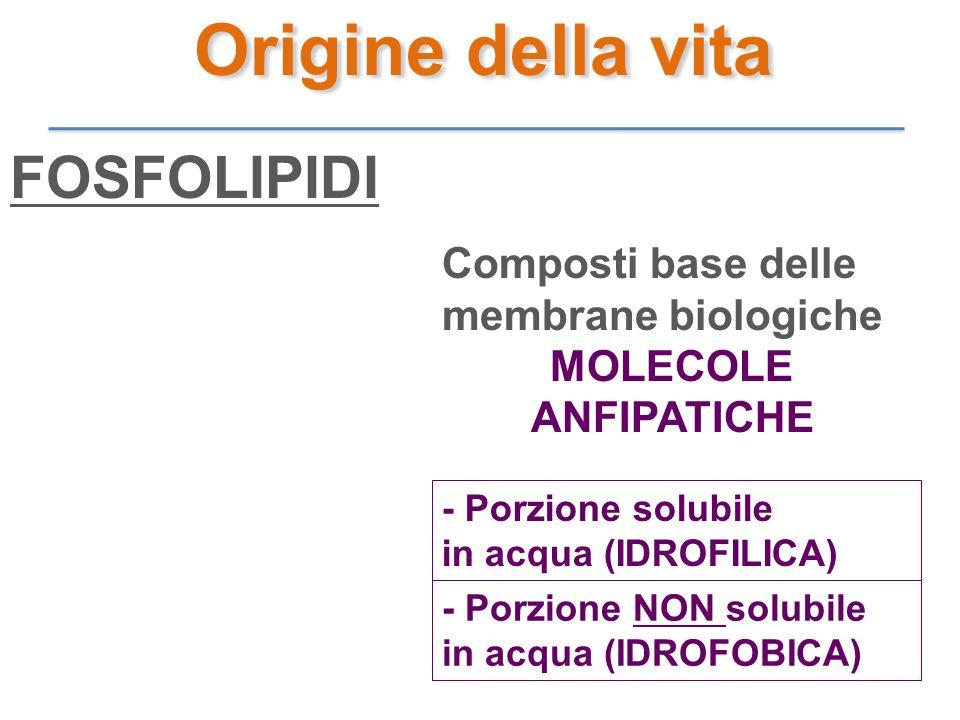 FOSFOLIPIDI Composti base delle membrane biologiche MOLECOLE ANFIPATICHE - Porzione solubile in acqua (IDROFILICA) - Porzione NON solubile in acqua (I