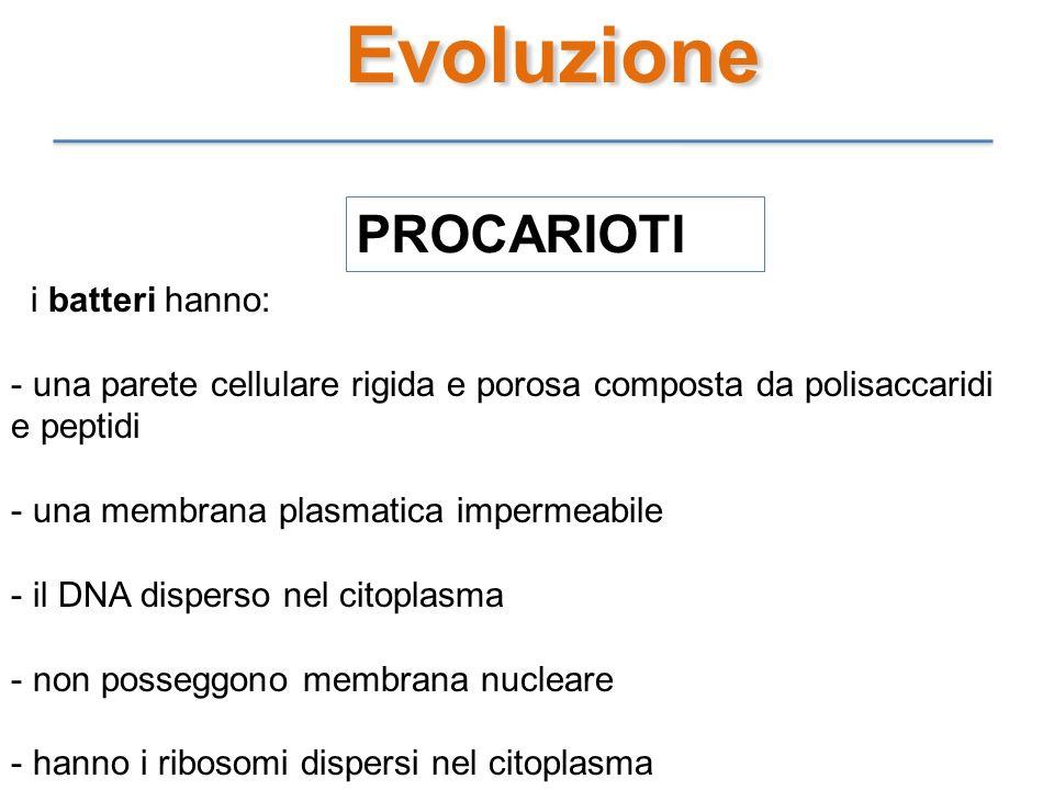 Evoluzione PROCARIOTI i batteri hanno: - una parete cellulare rigida e porosa composta da polisaccaridi e peptidi - una membrana plasmatica impermeabi