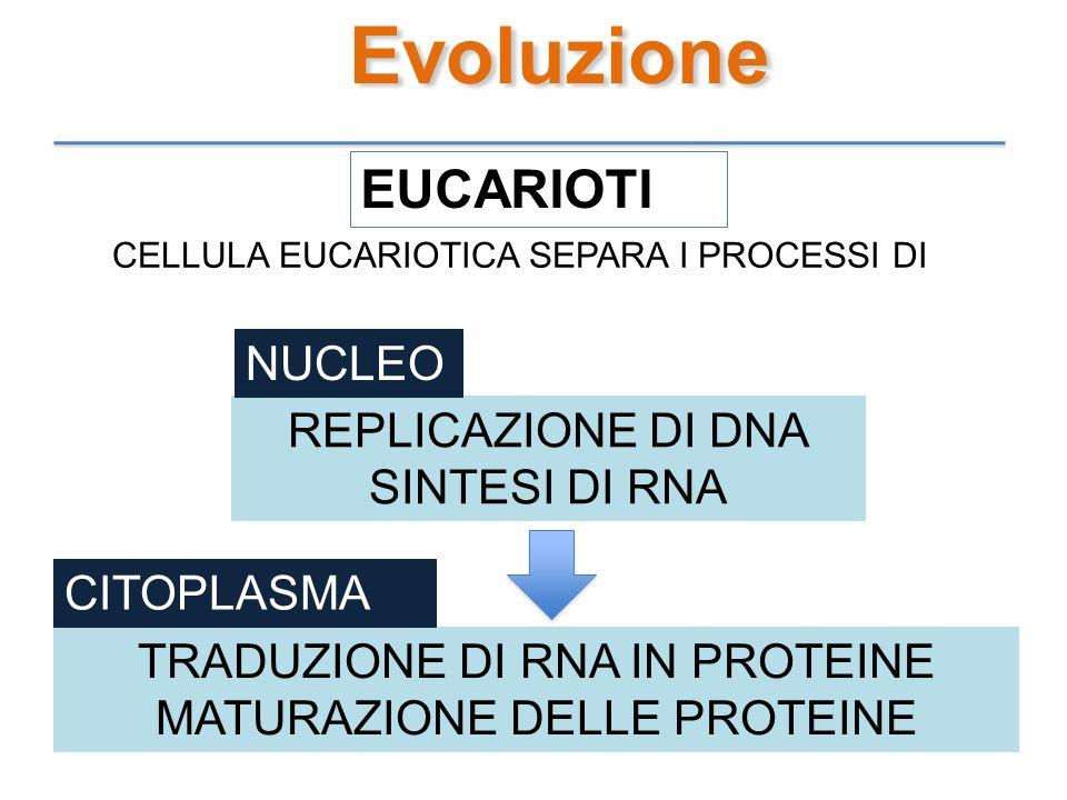 Evoluzione EUCARIOTI CELLULA EUCARIOTICA SEPARA I PROCESSI DI REPLICAZIONE DI DNA SINTESI DI RNA NUCLEO TRADUZIONE DI RNA IN PROTEINE MATURAZIONE DELL
