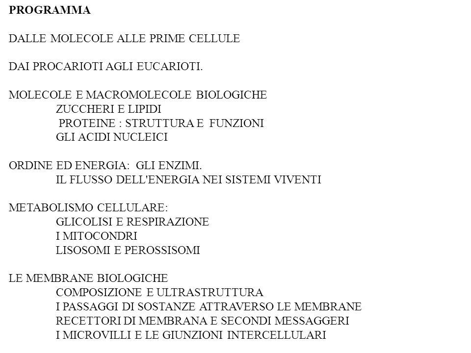 La cellula eucariotica CITOSCHELETRO Composto da MICROTUBULI FIBRE DI ACTINA FILAMENTI INTERMEDI Il citoscheletro fornisce: IMPALCATURA STRUTTURALE DELLA CELLULA - determina la forma della cellula - è responsabile dei movimenti cellulari - è sede del trasporto mediato da proteine - è responsabile dei movimenti dei cromosomi - ecc…….