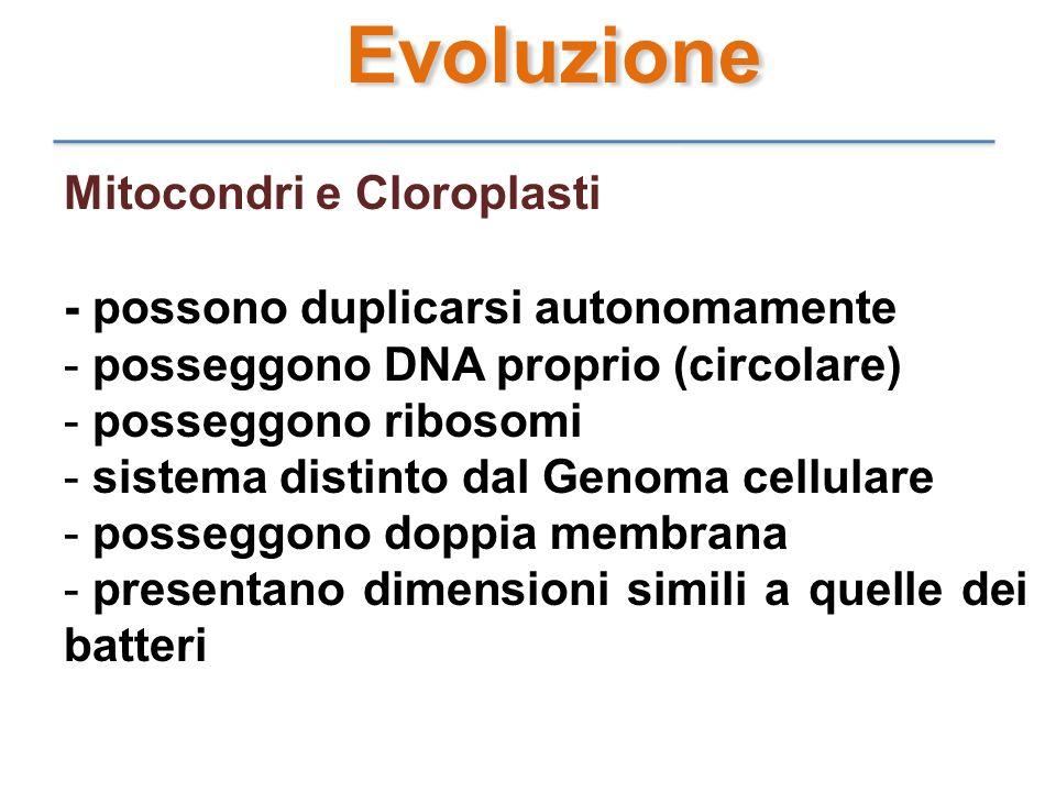 Evoluzione Mitocondri e Cloroplasti - possono duplicarsi autonomamente - p- posseggono DNA proprio (circolare) - p- posseggono ribosomi - s- sistema d
