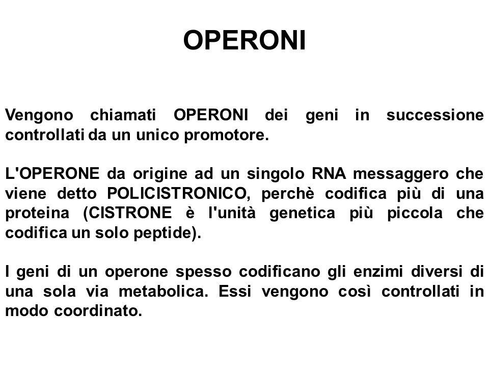 OPERONI Vengono chiamati OPERONI dei geni in successione controllati da un unico promotore. L'OPERONE da origine ad un singolo RNA messaggero che vien