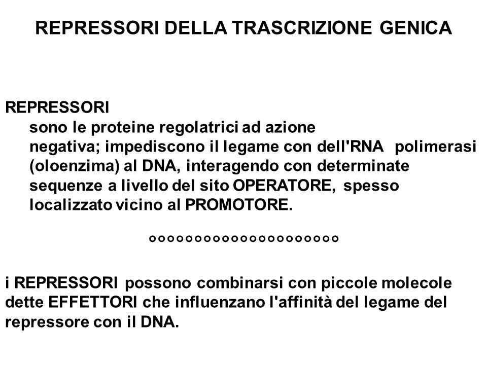 REPRESSORI DELLA TRASCRIZIONE GENICA REPRESSORI sono le proteine regolatrici ad azione negativa; impediscono il legame con dell'RNApolimerasi (oloenzi