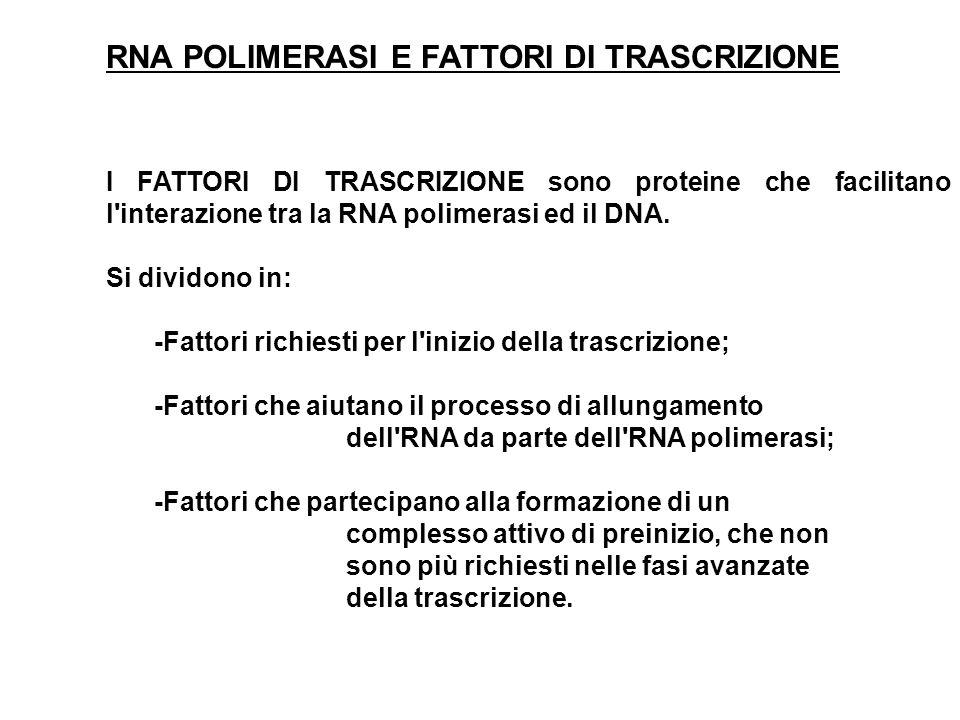 RNA POLIMERASI E FATTORI DI TRASCRIZIONE I FATTORI DI TRASCRIZIONE sono proteine che facilitano l'interazione tra la RNA polimerasi ed il DNA. Si divi