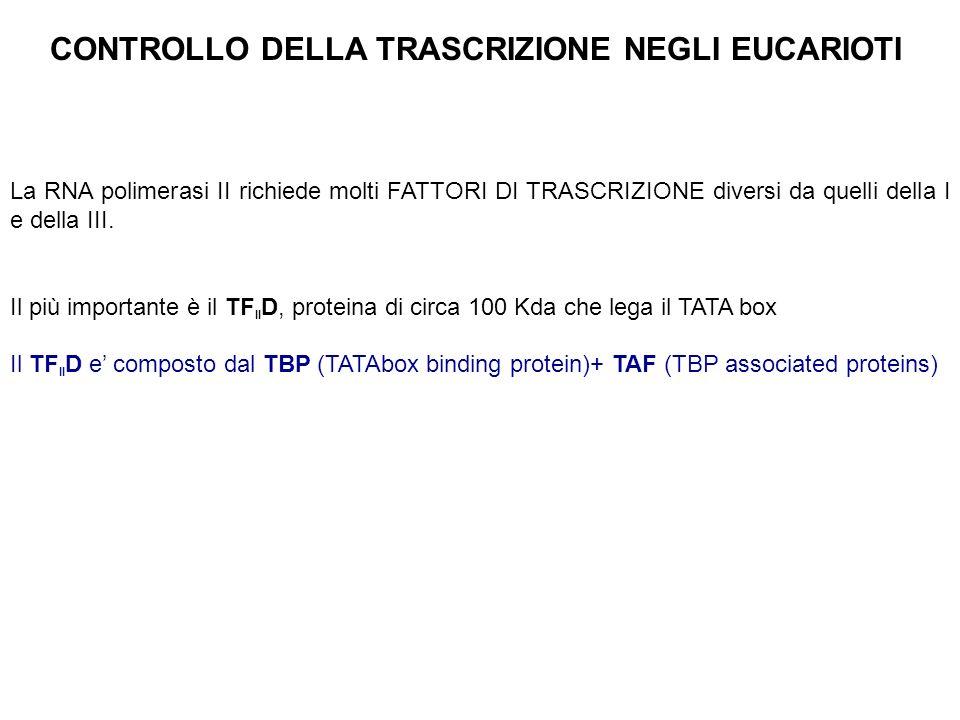 La RNA polimerasi II richiede molti FATTORI DI TRASCRIZIONE diversi da quelli della I e della III. Il più importante è il TF II D, proteina di circa 1