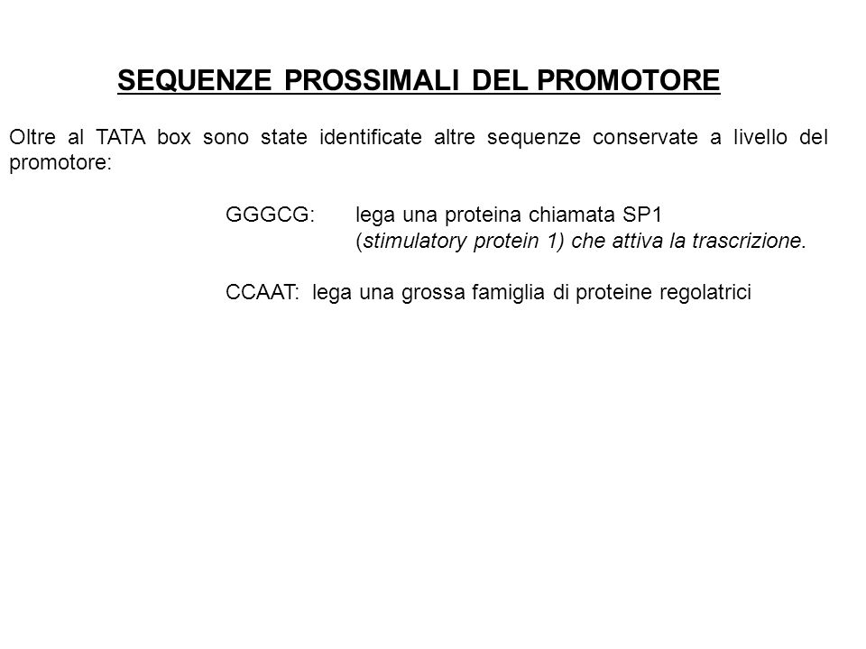 SEQUENZE PROSSIMALI DEL PROMOTORE Oltre al TATA box sono state identificate altre sequenze conservate a livello del promotore: GGGCG: lega una protein