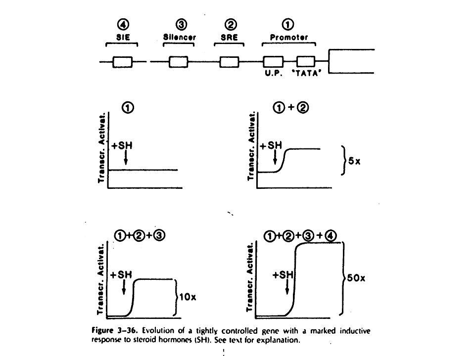 5 3 esone 12 4 56 7 83 COOH NH 2 DNA ORMONE HINGE N - terminale
