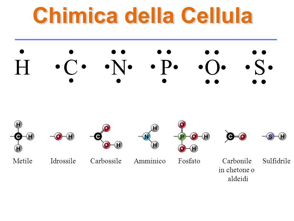 Chimica della Cellula H C N P O S........................... Metile Idrossile Carbossile Amminico Fosfato Carbonile Sulfidrile in chetone o aldeidi