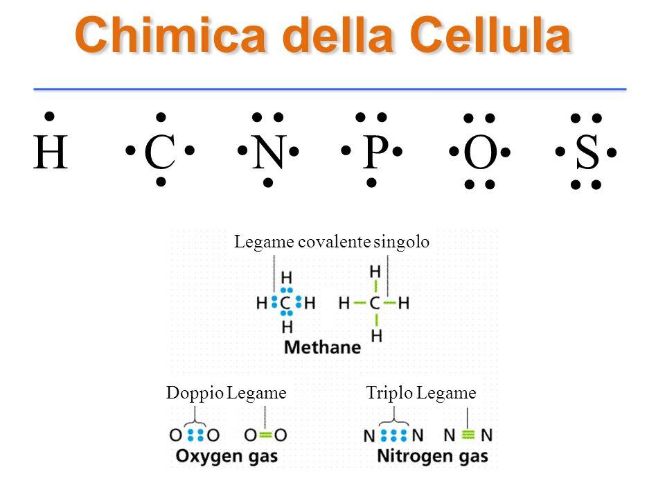 Chimica della Cellula H C N P O S........................... Legame covalente singolo Doppio LegameTriplo Legame