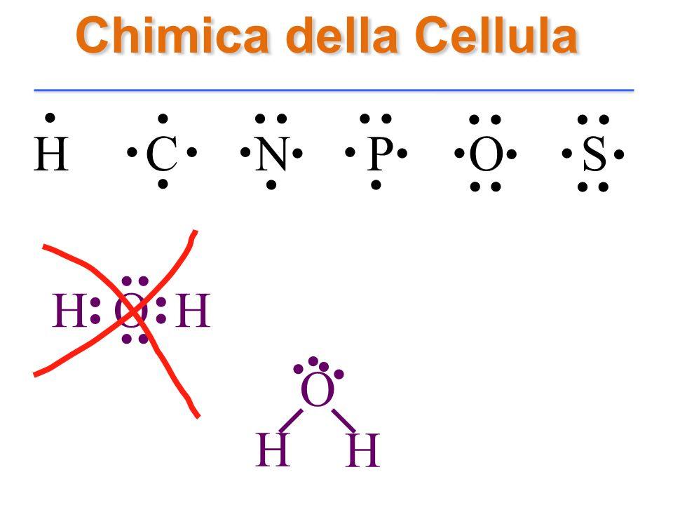 Chimica della Cellula H C N P O S............................. H O H........ H H.. O