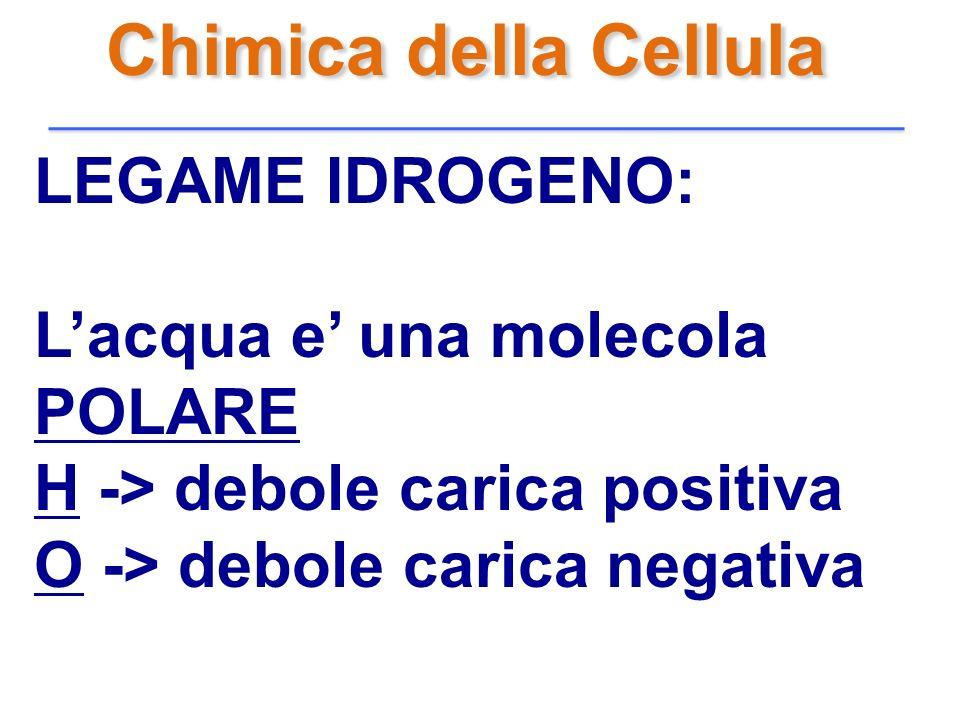 Chimica della Cellula LEGAME IDROGENO: Lacqua e una molecola POLARE H -> debole carica positiva O -> debole carica negativa
