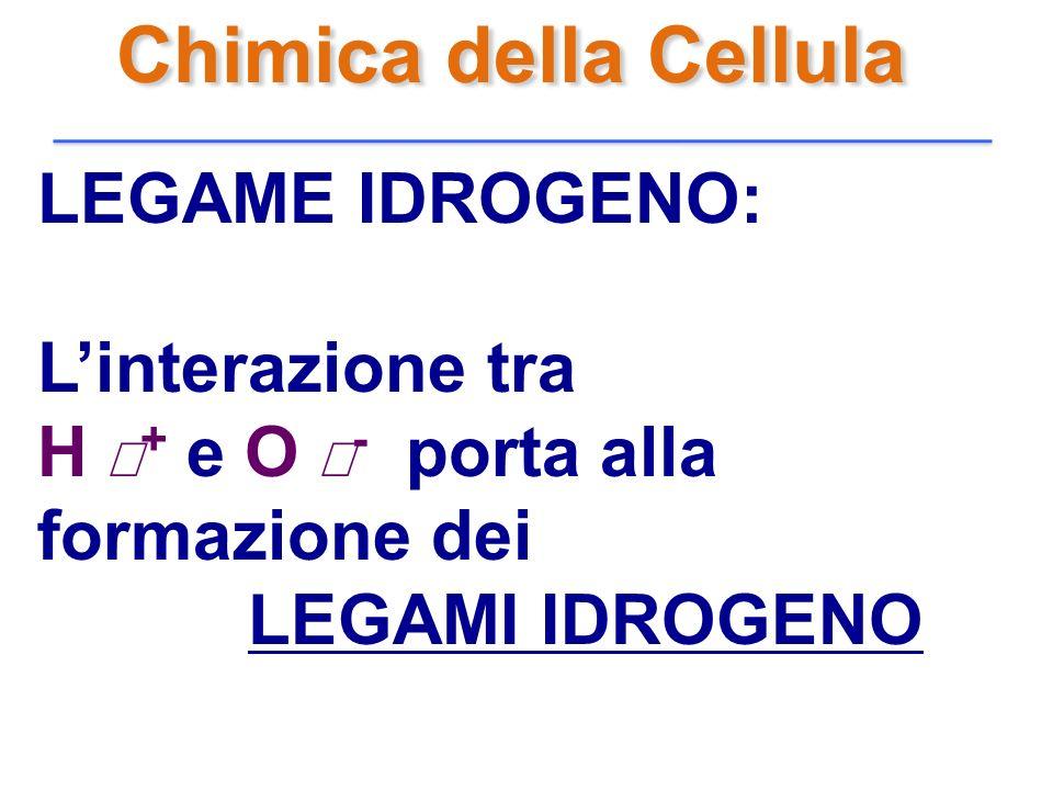 Chimica della Cellula LEGAME IDROGENO: Linterazione tra H + e O - porta alla formazione dei LEGAMI IDROGENO