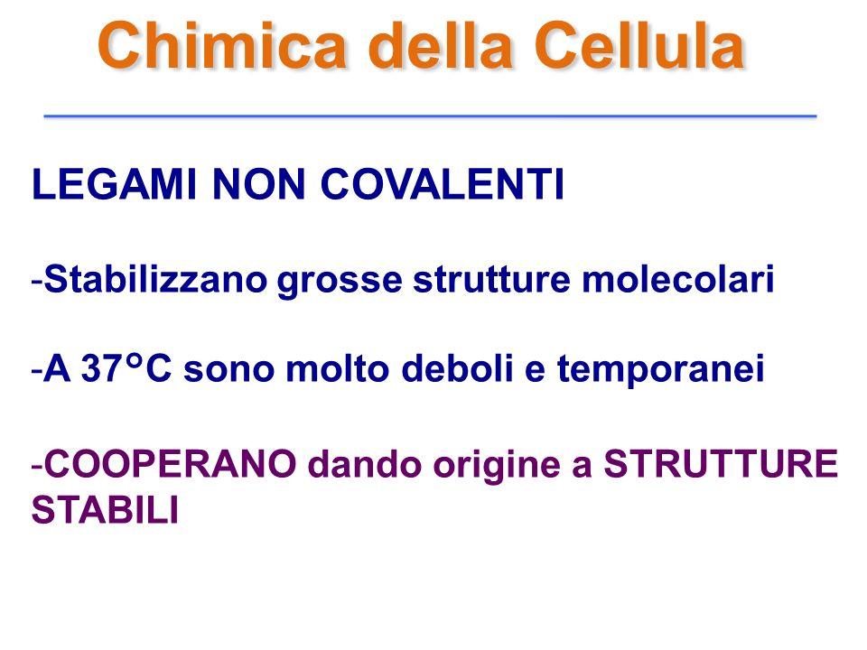 Chimica della Cellula LEGAMI NON COVALENTI -Stabilizzano grosse strutture molecolari -A 37°C sono molto deboli e temporanei -COOPERANO dando origine a
