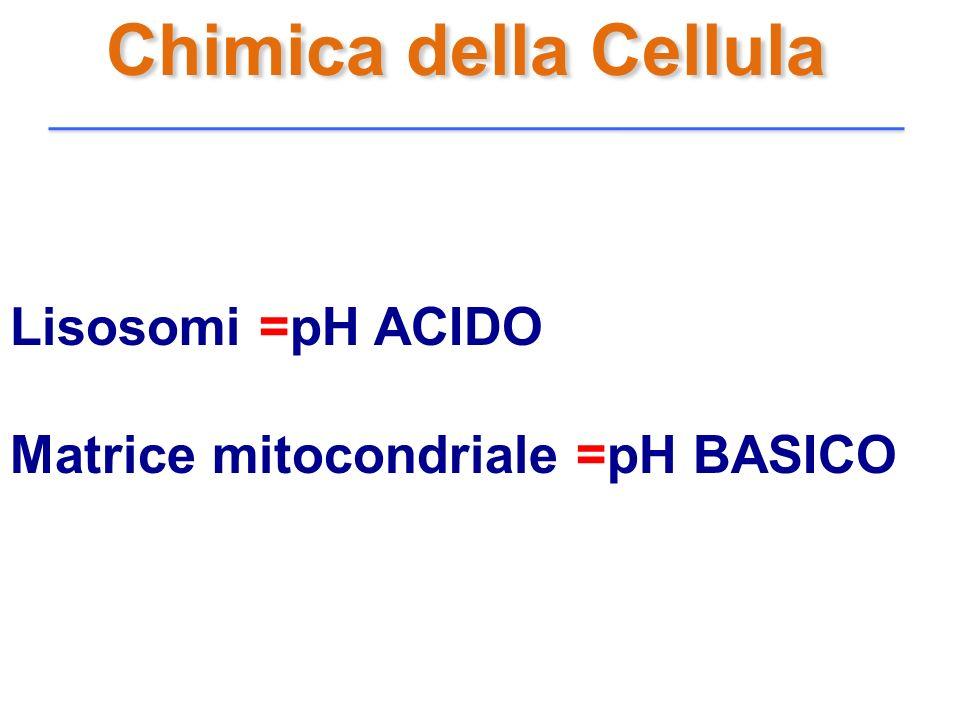 Chimica della Cellula Lisosomi =pH ACIDO Matrice mitocondriale =pH BASICO