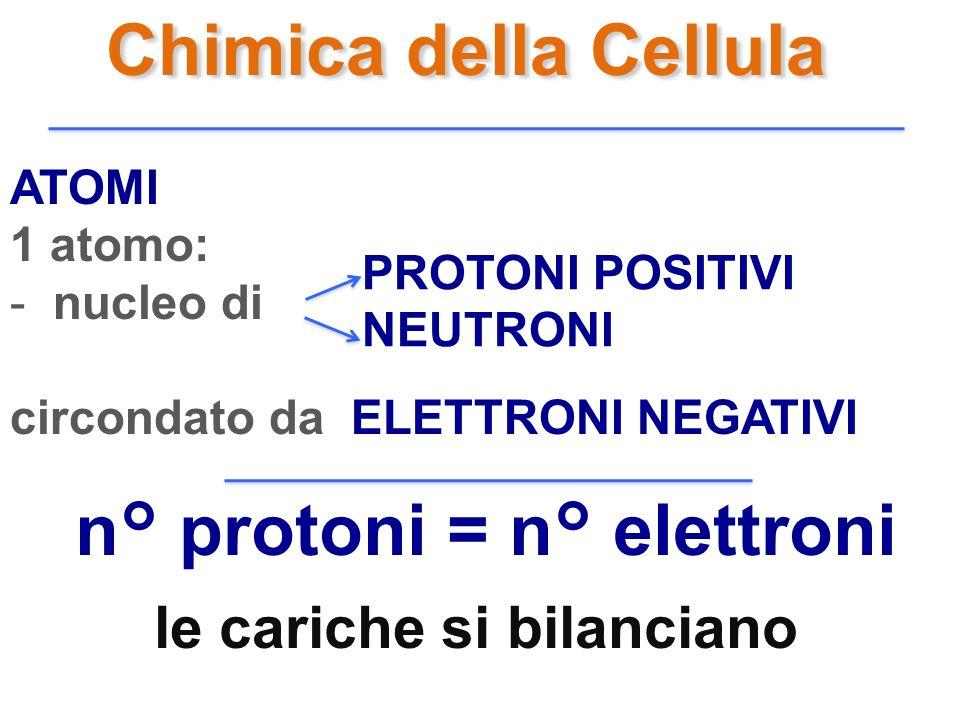Chimica della Cellula ATOMI 1 atomo: - nucleo di circondato da ELETTRONI NEGATIVI PROTONI POSITIVI NEUTRONI n° protoni = n° elettroni le cariche si bi
