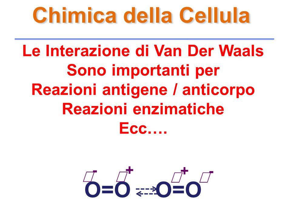 Chimica della Cellula Le Interazione di Van Der Waals Sono importanti per Reazioni antigene / anticorpo Reazioni enzimatiche Ecc…. O=O - + - +