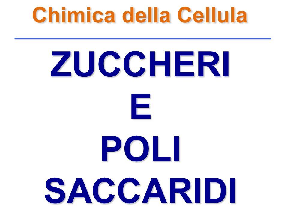 Chimica della Cellula ZUCCHERIEPOLISACCARIDI
