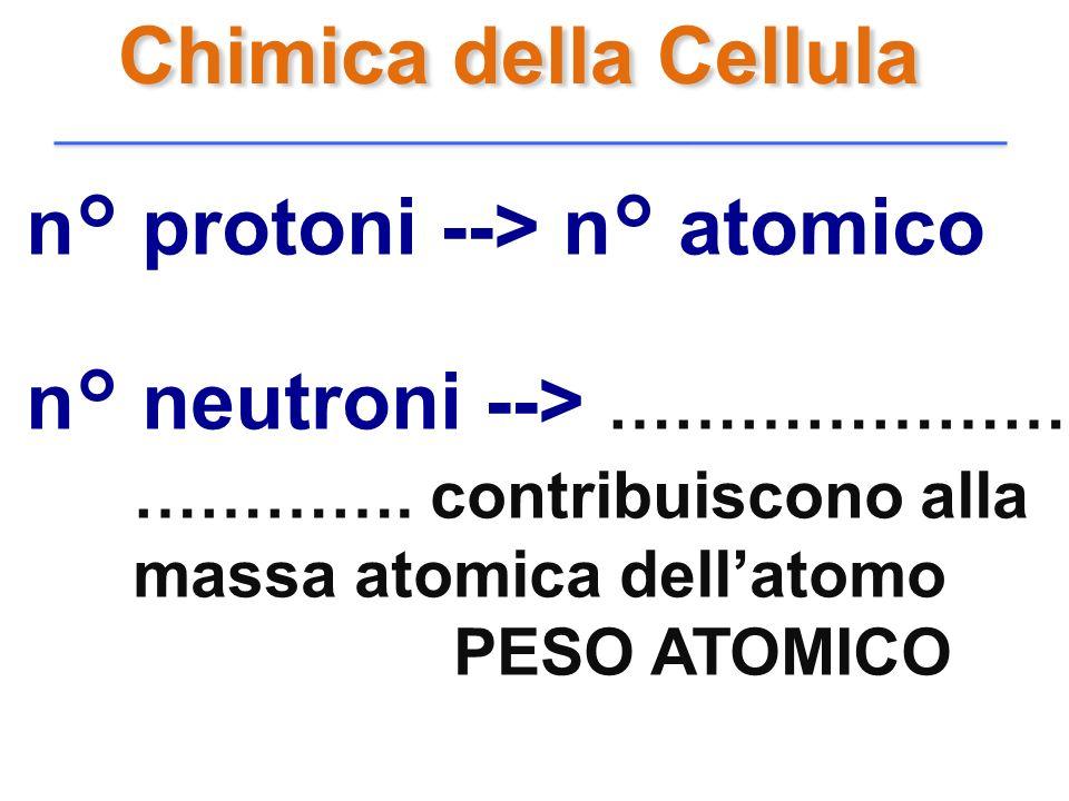 n° protoni --> n° atomico n° neutroni --> …………………… …………. contribuiscono alla massa atomica dellatomo PESO ATOMICO Chimica della Cellula