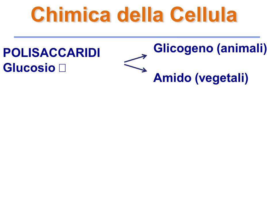 Chimica della Cellula POLISACCARIDI Glucosio Glicogeno (animali) Amido (vegetali)