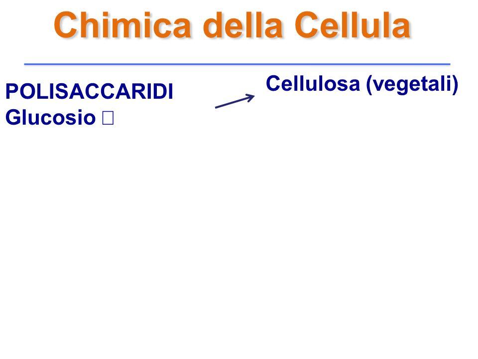 Chimica della Cellula POLISACCARIDI Glucosio Cellulosa (vegetali)
