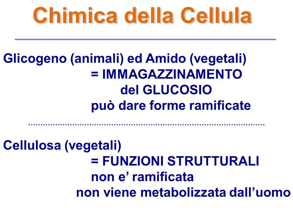 Chimica della Cellula Cellulosa (vegetali) = FUNZIONI STRUTTURALI non e ramificata non viene metabolizzata dalluomo Glicogeno (animali) ed Amido (vege
