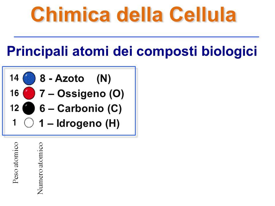 Principali atomi dei composti biologici 8 - Azoto (N) 7 – Ossigeno (O) 6 – Carbonio (C) 1 – Idrogeno (H) Peso atomico Numero atomico