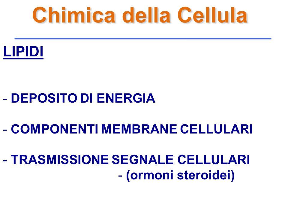 LIPIDI - DEPOSITO DI ENERGIA - COMPONENTI MEMBRANE CELLULARI - TRASMISSIONE SEGNALE CELLULARI - (ormoni steroidei)