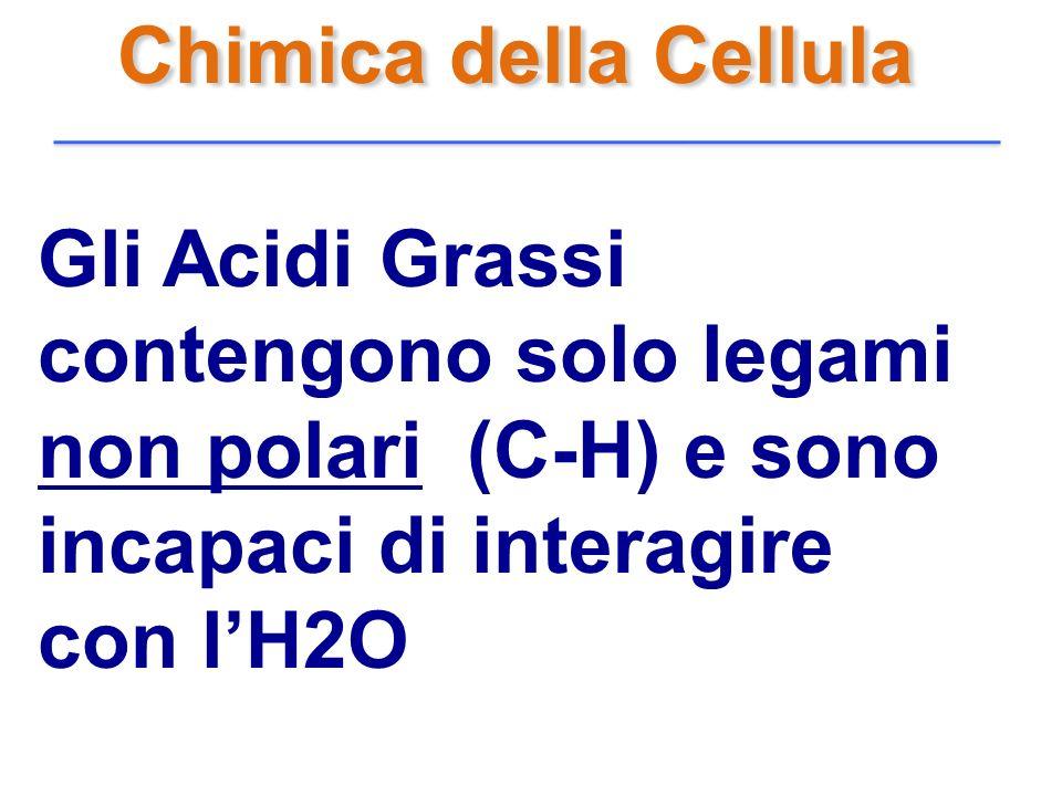Chimica della Cellula Gli Acidi Grassi contengono solo legami non polari (C-H) e sono incapaci di interagire con lH2O