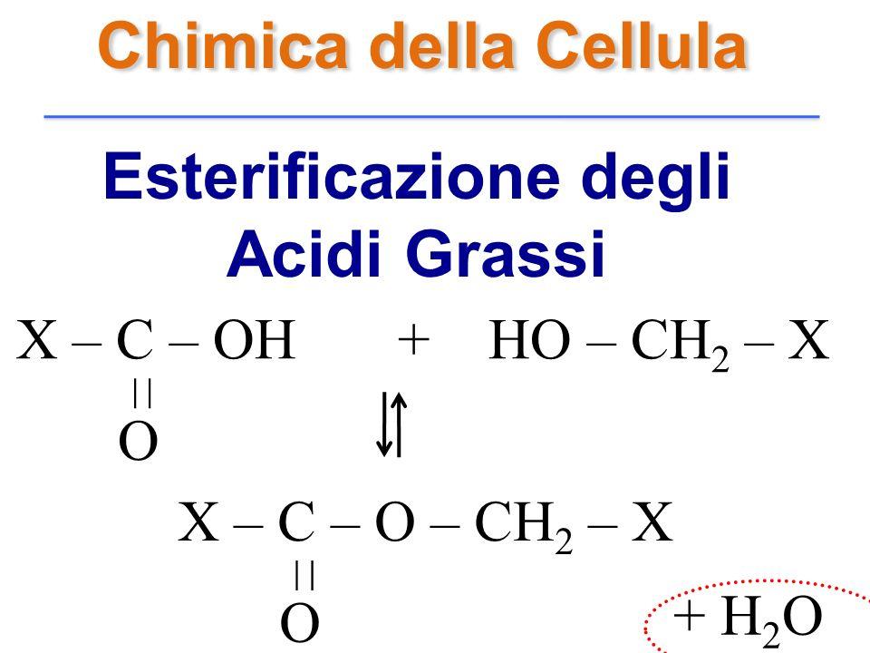 Chimica della Cellula Esterificazione degli Acidi Grassi O X – C – OH + HO – CH 2 – X –– X – C – O – CH 2 – X O –– + H 2 O