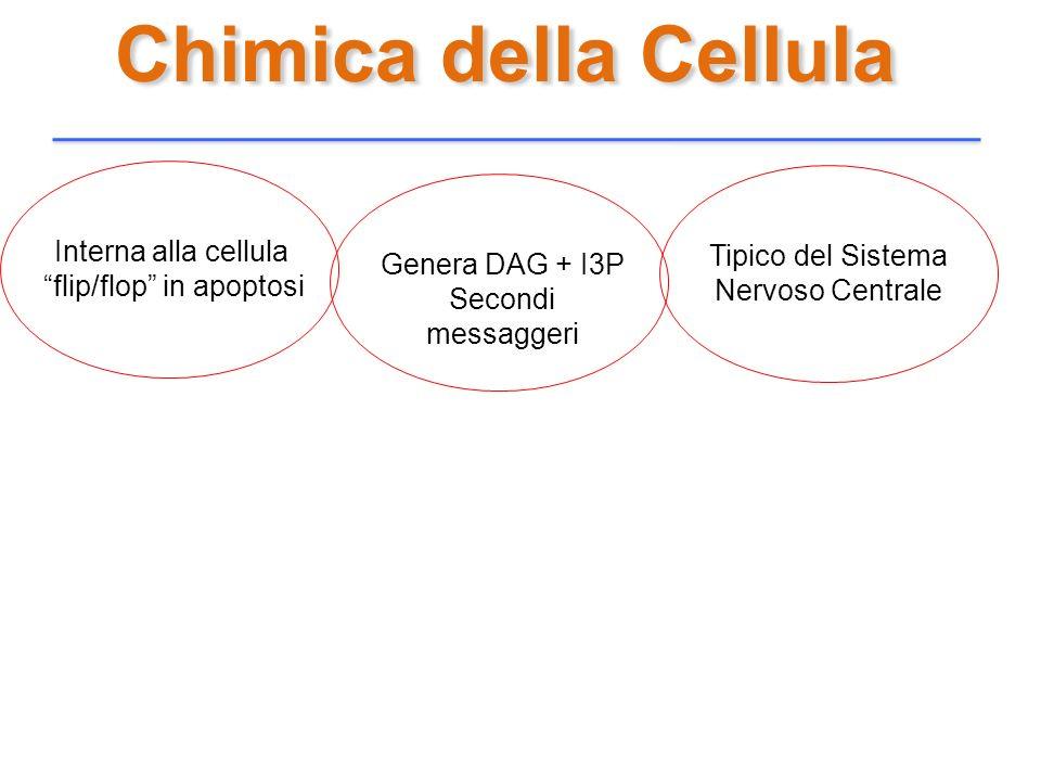Chimica della Cellula Interna alla cellula flip/flop in apoptosi Genera DAG + I3P Secondi messaggeri Tipico del Sistema Nervoso Centrale