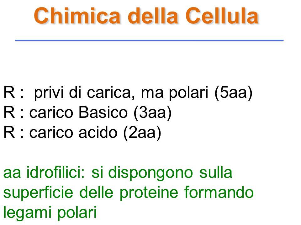 Chimica della Cellula R : privi di carica, ma polari (5aa) R : carico Basico (3aa) R : carico acido (2aa) aa idrofilici: si dispongono sulla superfici