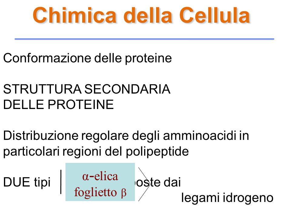 Chimica della Cellula Conformazione delle proteine STRUTTURA SECONDARIA DELLE PROTEINE Distribuzione regolare degli amminoacidi in particolari regioni