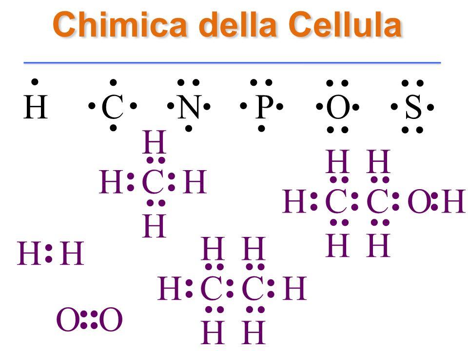 Chimica della Cellula H C N P O S........................... H.. H C H...... H H O...... H C.... H H.. C H...... H H.... H C.... H H.. C O H...... H H