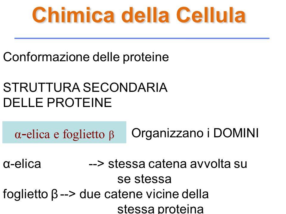 Chimica della Cellula Conformazione delle proteine STRUTTURA SECONDARIA DELLE PROTEINE Organizzano i DOMINI α-elica --> stessa catena avvolta su se st