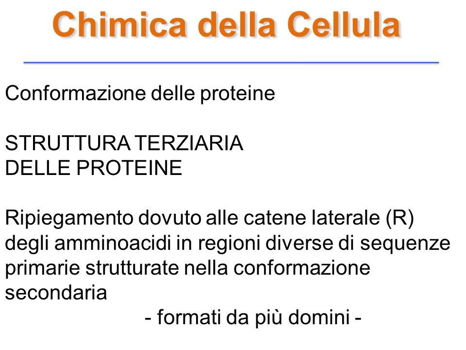 Chimica della Cellula Conformazione delle proteine STRUTTURA TERZIARIA DELLE PROTEINE Ripiegamento dovuto alle catene laterale (R) degli amminoacidi i