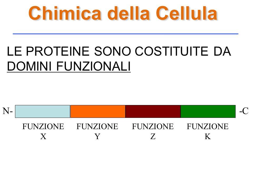Chimica della Cellula LE PROTEINE SONO COSTITUITE DA DOMINI FUNZIONALI N- -C FUNZIONE X FUNZIONE Y FUNZIONE Z FUNZIONE K