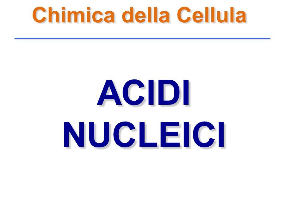 Chimica della Cellula ACIDI NUCLEICI ACIDI NUCLEICI
