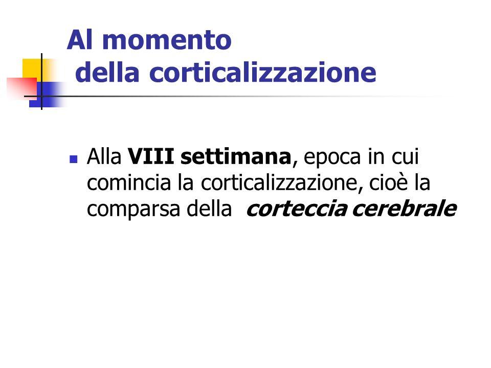 Al momento della corticalizzazione Alla VIII settimana, epoca in cui comincia la corticalizzazione, cioè la comparsa della corteccia cerebrale