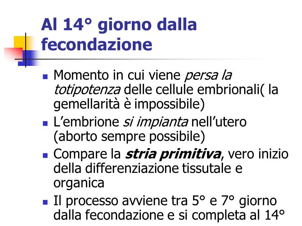 Al 14° giorno dalla fecondazione Momento in cui viene persa la totipotenza delle cellule embrionali( la gemellarità è impossibile) Lembrione si impian