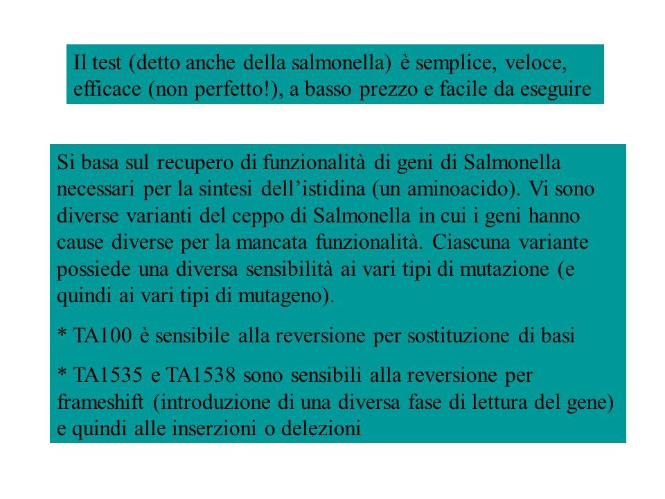 Si basa sul recupero di funzionalità di geni di Salmonella necessari per la sintesi dellistidina (un aminoacido). Vi sono diverse varianti del ceppo d