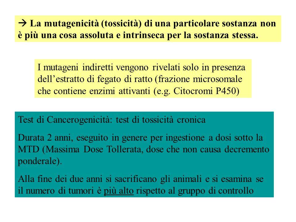 I mutageni indiretti vengono rivelati solo in presenza dellestratto di fegato di ratto (frazione microsomale che contiene enzimi attivanti (e.g. Citoc