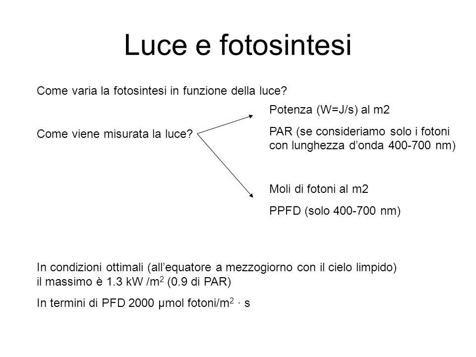 Luce e fotosintesi Come varia la fotosintesi in funzione della luce? Come viene misurata la luce? Potenza (W=J/s) al m2 PAR (se consideriamo solo i fo