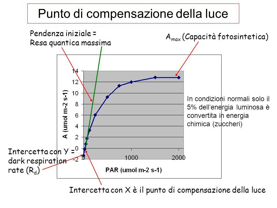 A max (Capacità fotosintetica) Pendenza iniziale = Resa quantica massima Intercetta con X è il punto di compensazione della luce Intercetta con Y = da