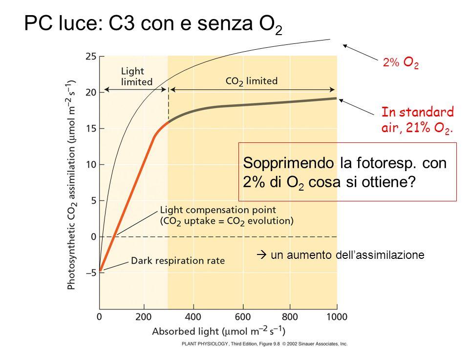 In standard air, 21% O 2. 2% O 2 PC luce: C3 con e senza O 2 Sopprimendo la fotoresp. con 2% di O 2 cosa si ottiene? un aumento dellassimilazione