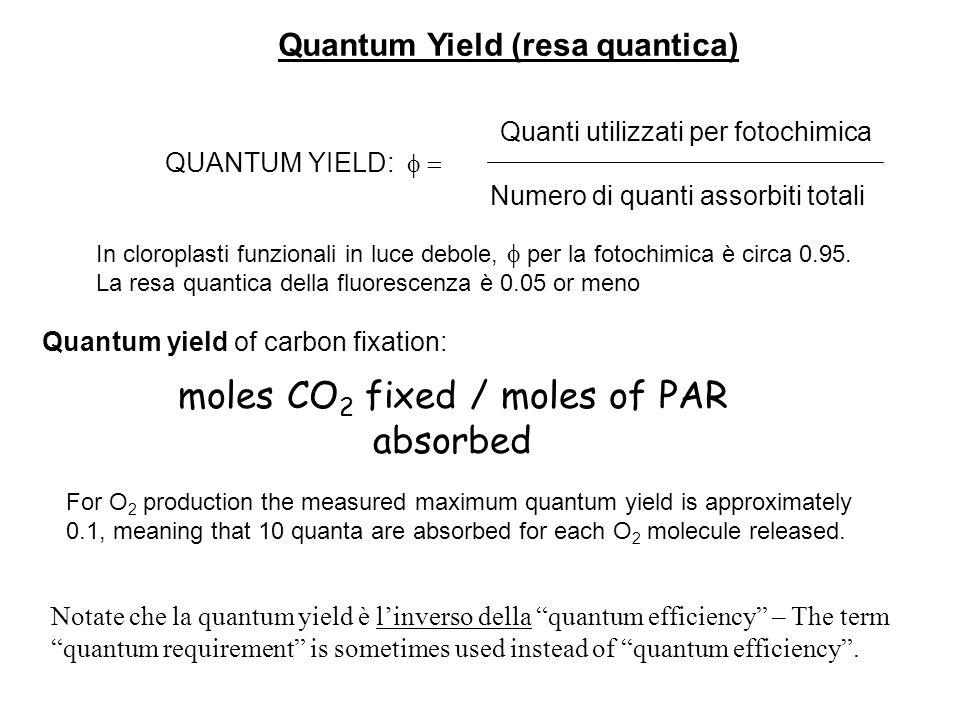 Notate che la quantum yield è linverso della quantum efficiency – The term quantum requirement is sometimes used instead of quantum efficiency. Quanti