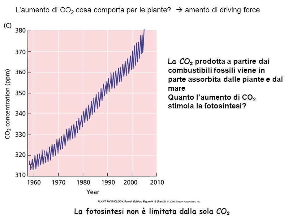Laumento di CO 2 cosa comporta per le piante? amento di driving force La fotosintesi non è limitata dalla sola CO 2 La CO 2 prodotta a partire dai com