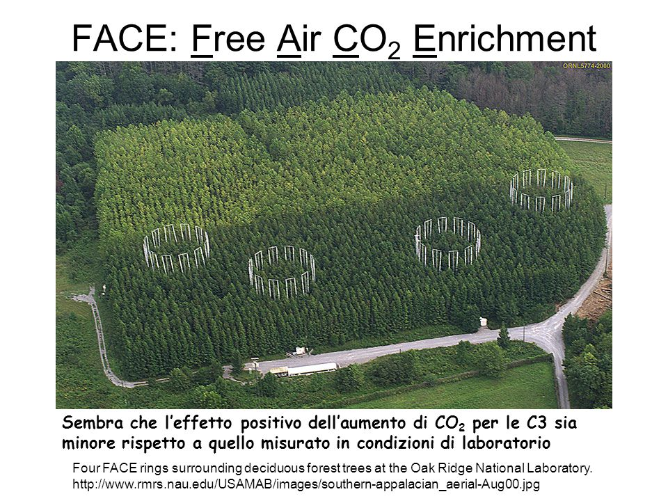 FACE: Free Air CO 2 Enrichment Four FACE rings surrounding deciduous forest trees at the Oak Ridge National Laboratory. http://www.rmrs.nau.edu/USAMAB