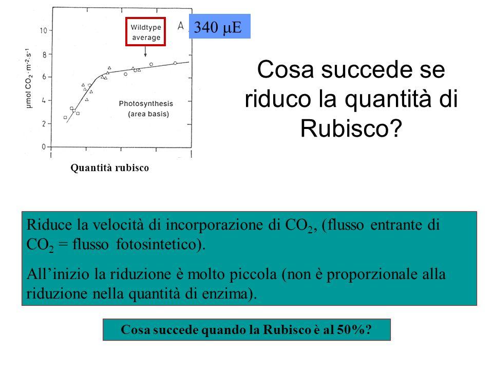 Cosa succede se riduco la quantità di Rubisco? 340 E Riduce la velocità di incorporazione di CO 2, (flusso entrante di CO 2 = flusso fotosintetico). A